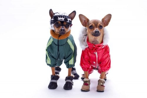 Two dogs with costumes on.