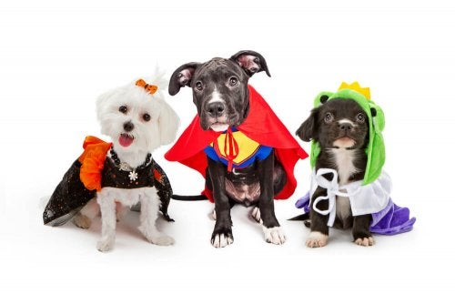 Some dogs with costumes on.