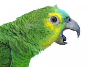 A close up of a parrot.