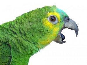 A close up of a parrot.