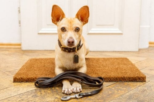 7 Common Mistakes When Training Dogs