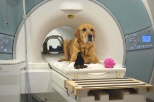 A dog in a brain scanner.