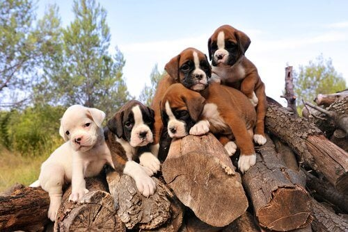 Five puppies on a wood pile.