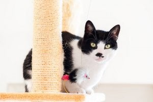 A cat scratcher to avoid declawing your cat.