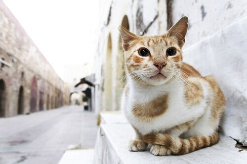 A cat sitting in the street.
