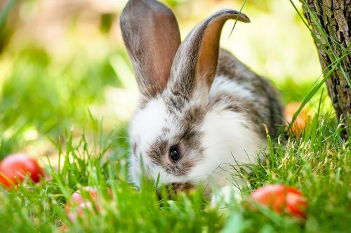 curiosities about rabbits