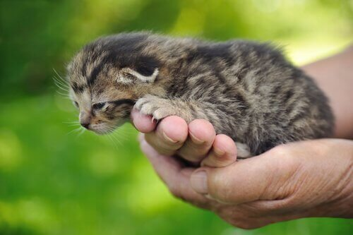 A tiny kitten being held.
