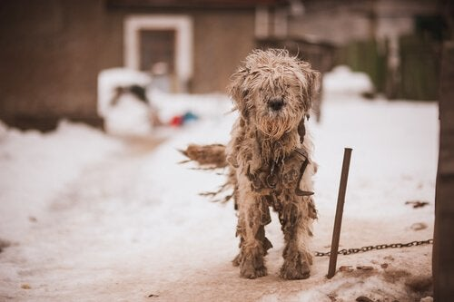 A dog tied up out on the snow.