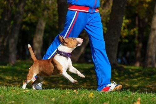 A dog tagging along for a run.
