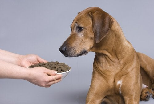 A dog looking at a bowl of biscuits.