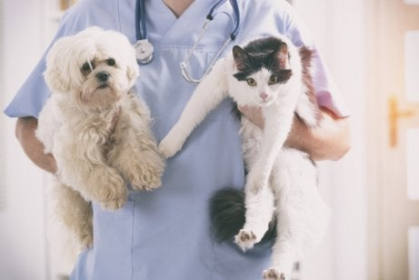 A vet holding a dog and a cat.