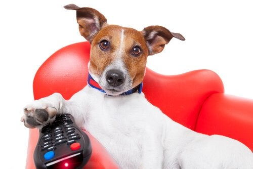 A dog with a TV remote.