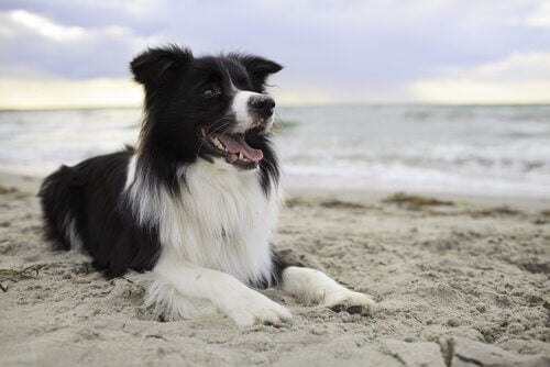 A dog laying on the beach.