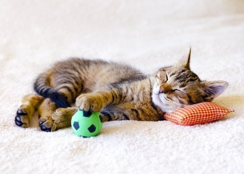 A cat sleeping with his ball.