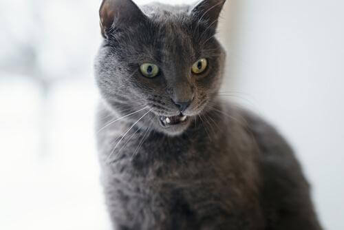 Signs that Your Cat is Angry