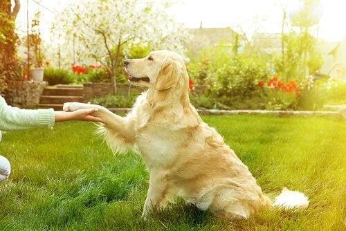 A dog playing with his owner.