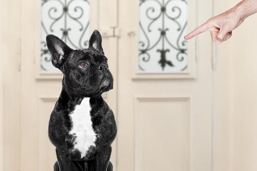 What Are You Doing Wrong When Training Your Dog?