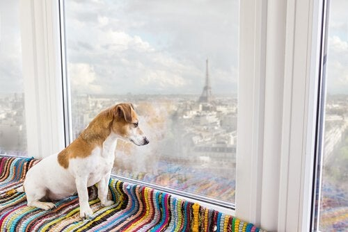 The 9 Best Pet-Friendly Destinations