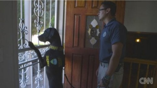 A police dog looking out the door.