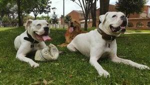 Three dogs sitting in a garden.