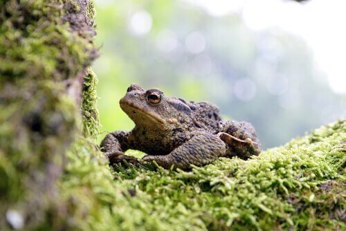 A frog on some moss.