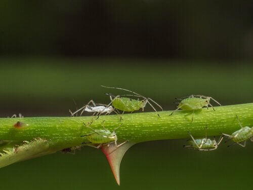Some aphids on a plant.