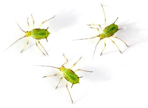 Three small insects.