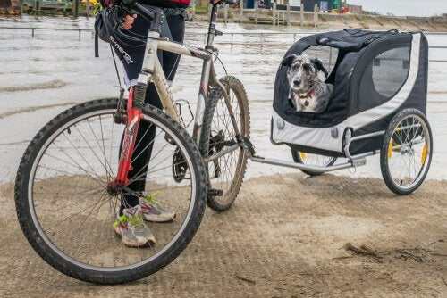 Use a Bicycle Trailer to Walk Your Dog
