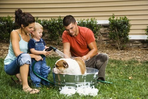 A family giving their dog a bath.