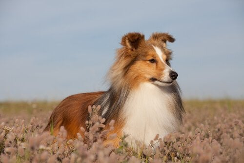 A dog in a field.