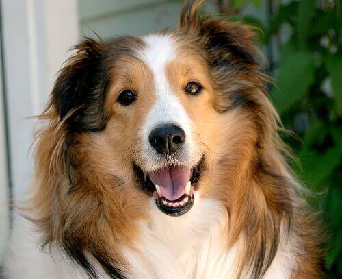 Do dogs smile?