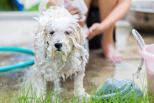 A dog having a shower.