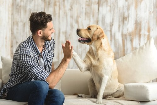 A man and a dog high-fiving.