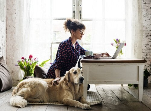 A woman on the computer and her dog.
