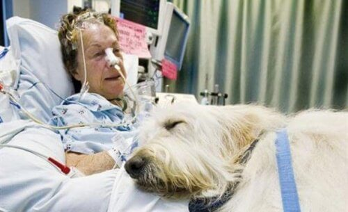 A dog next to a patient in bed.
