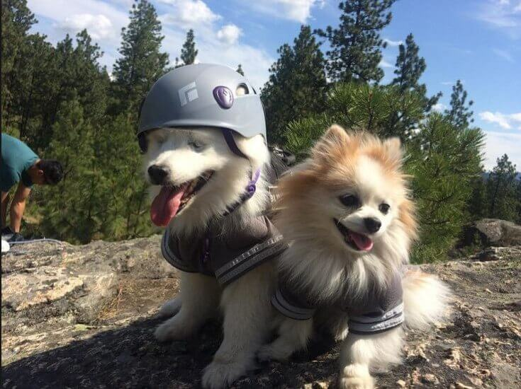 Hoshi and zen wearing clothes and a helmet.