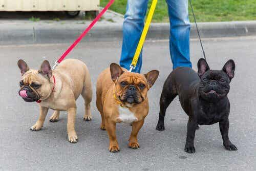 7 Tips to Stop Your Dog Pulling on the Leash