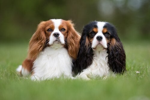 Two dogs side by side, socialising because love hormones influence animal behaviour.