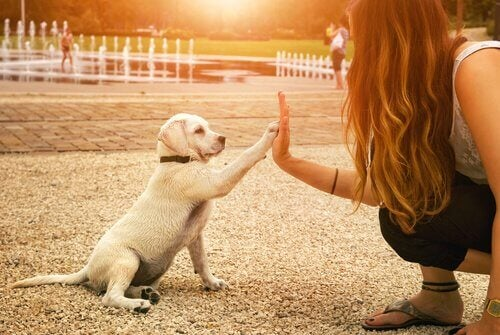 A dog giving his paw to a lady.
