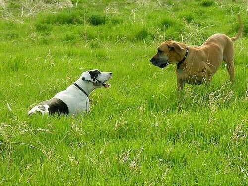 Two dogs in the grass.