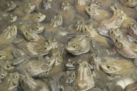 A large number of baby frogs.