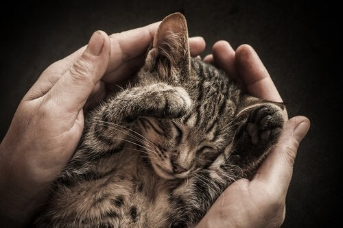 A tiny cat curled up in its owner's hands.