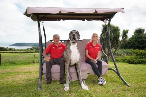 Major, the tallest dog in the world.