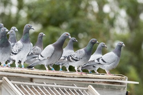 Pigeons perching on a roof.