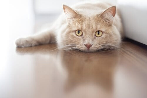 A cat laying on the floor.