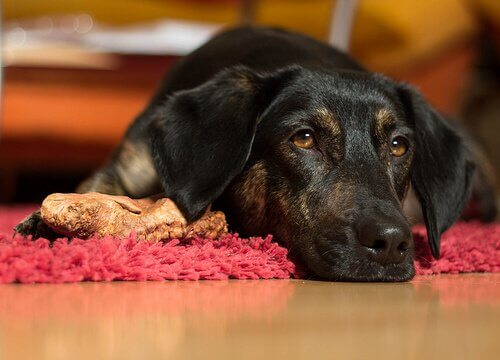 A black dog lying on the ground beside a bone.