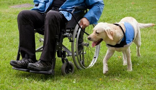 The Benefits of Using Dogs in Animal-Assisted Therapy