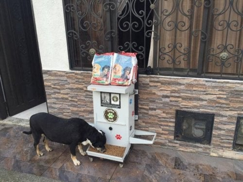 A dog eating from a food dispensing machine.
