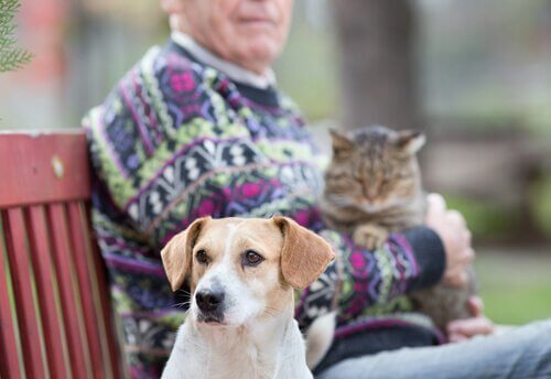 A dog on a park bench next to a man with a cat.