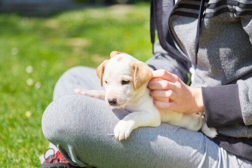 A person sitting on the grass with a puppy on her lap.